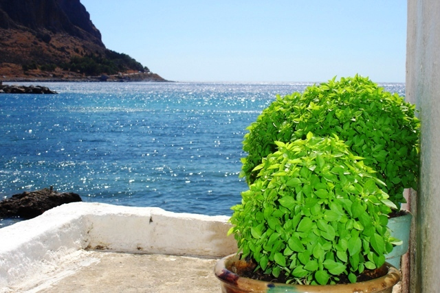 Pots of basil overlooking Monemvassia
