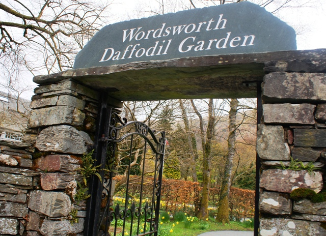 Wordsworth Daffodil Garden Grasmere - by Zoe Dawes