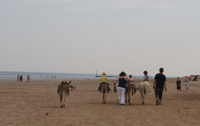 Donkeys on the beach at Mablethorpe