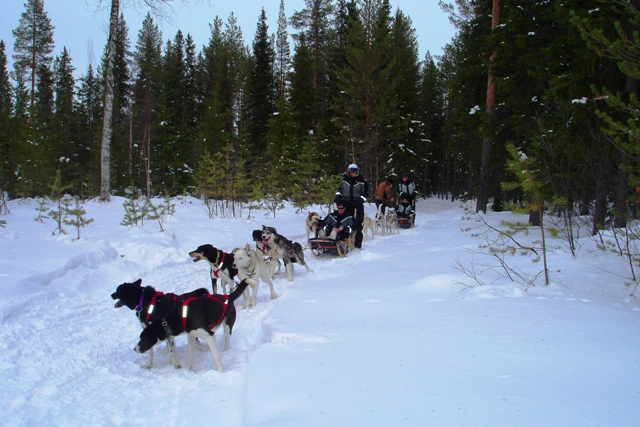 Husky sleighs Finland