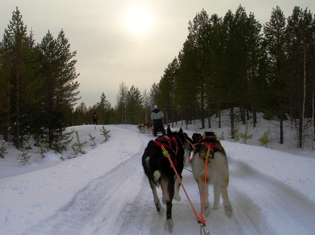 Husky sleigh ride, Finland