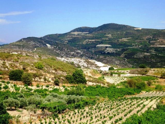 Zambartas Vineyards in Cyprus