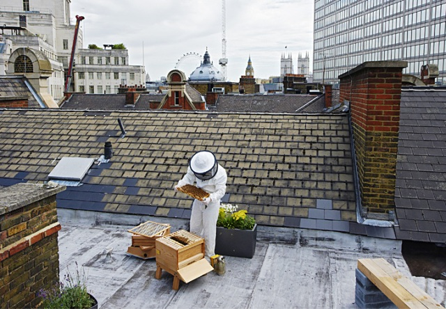Beehives on St Ermin's roof