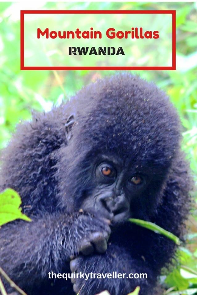 Mountain Gorillas Rwanda - Pinterest - Zoe Dawes
