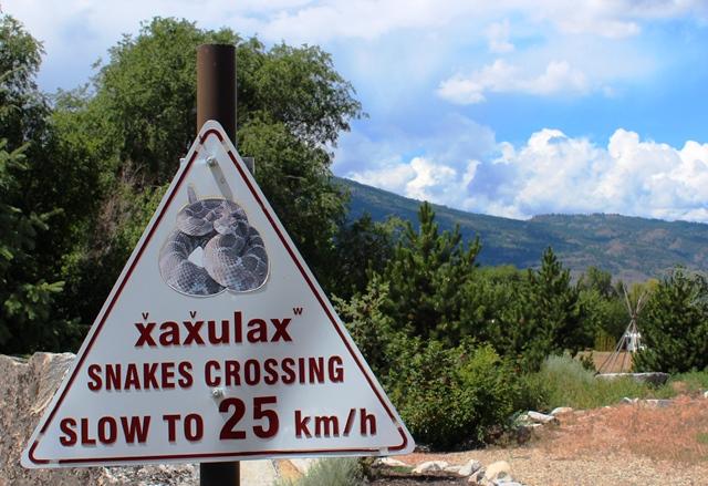 Snakes crossing Osoyoos Canada