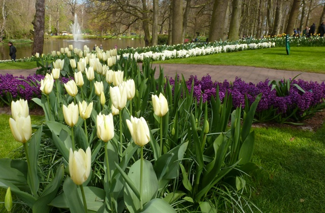 Tulips and hyacinths at Keukenhof Gardens - by Zoe Dawes