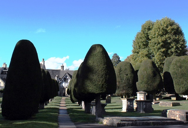 Yew Trees Painswick Cotswolds - photo zoe dawes
