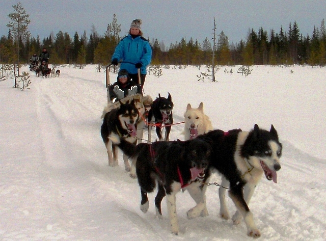 Husky sleigh in Finland
