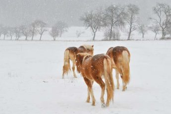 Three horses on winter's day - Klaus Heupel