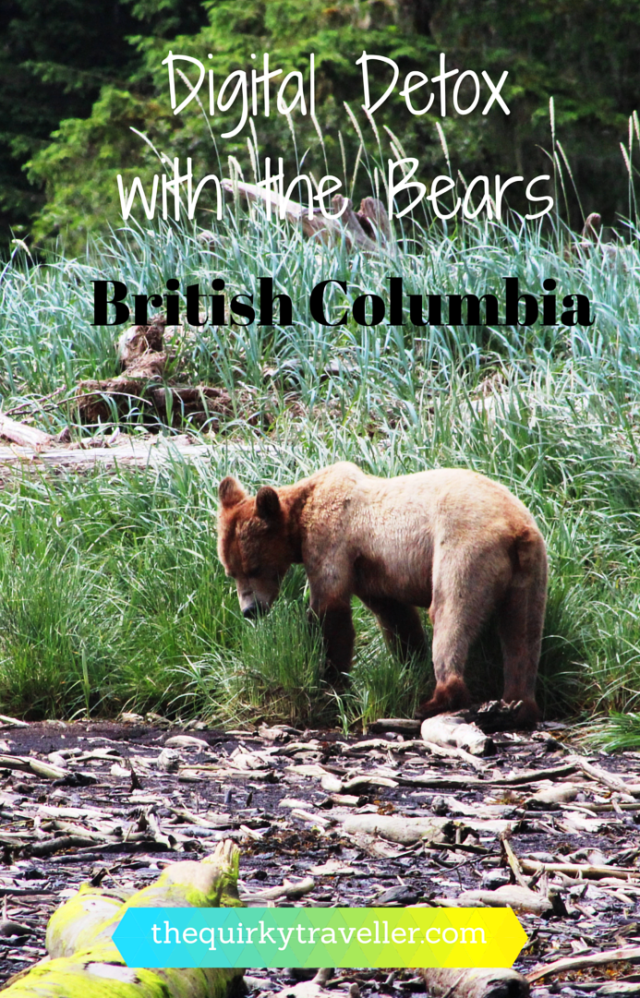 A Digital Detox with bears Bc Canada - Pinterest Pin zoedawes