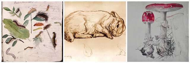 Beatrix Potter nature drawings - image zoedawes