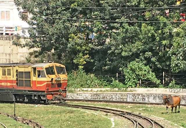 Toy Train engine and cow at station - India