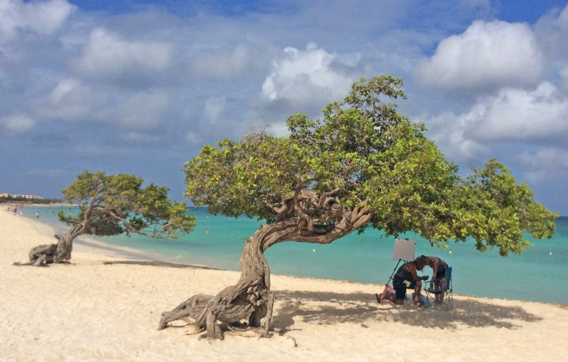 Divi divi trees on Eagle Beach on Aruba in the Caribbean. Photo Zoe Dawes