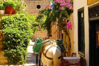 Donkey in Monemvassia Greece - image Zoe Dawes