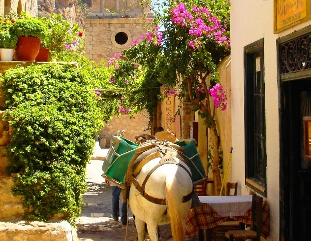 Donkey in Monemvassia Greece - image Zoe Dawes