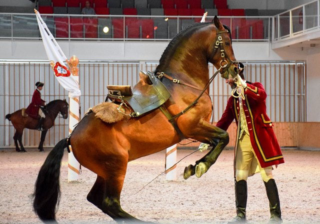 Portuguese School of Equestrian Art Things to do in Lisbon