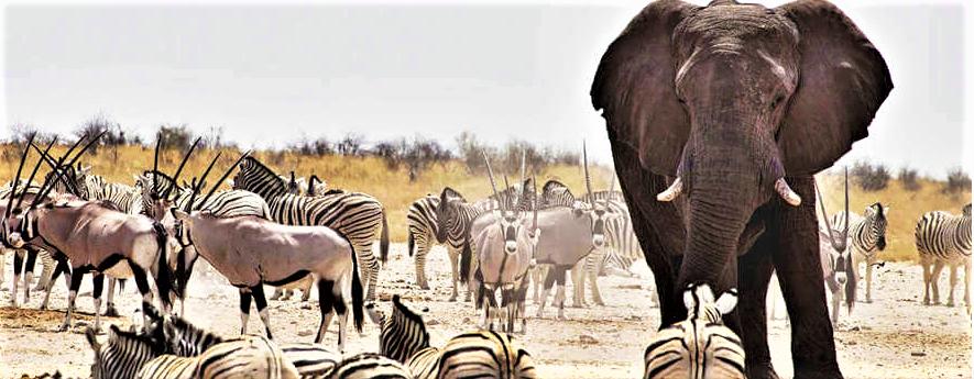 Wild animals in Etosha Namibia Africa