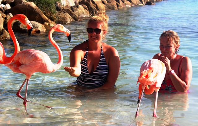 Feeding flamingos on Renaissance Aruba Island