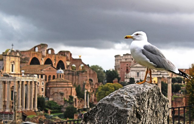 The Forum - and seagull! Rome in 48 hours