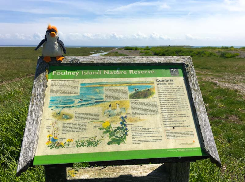 Founey Island Nature Reserve near Barrow in Furness Cumbria - photo Zoe Dawes