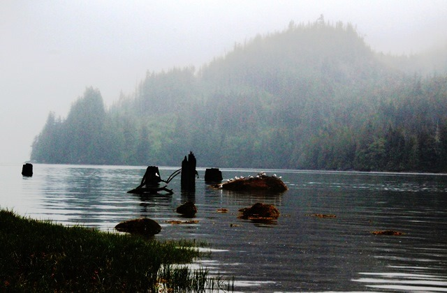 Glendale Cove in the rain BC Canada - photo zoedawes
