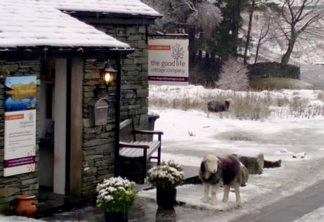 The Good Life Cottage Co and Herdwick sheep in snow