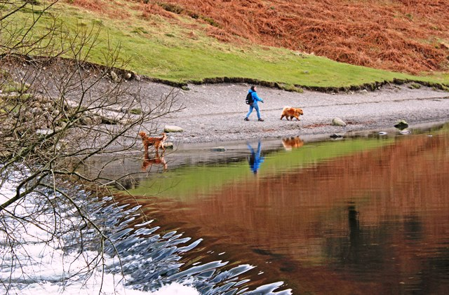 Dogs beside Grasmere lake, Cumbria - photo zoe dawes