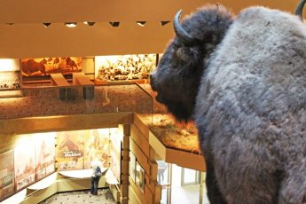 Head-Smashed-In-Buffalo-Jump site in Alberta, Canada, with The Quirky Traveller