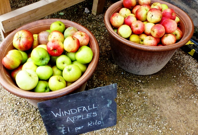 Windfalls for sale - apples in autumn - zoedawes