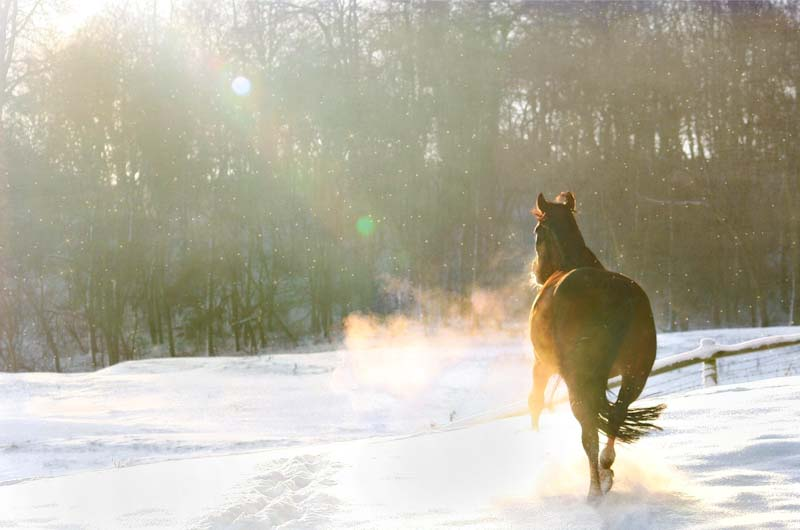 Horse in winter snow - image by Dorota Kudyba