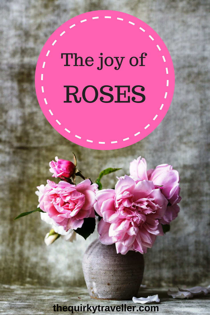 In praise of ROSES - The Quirky Traveller