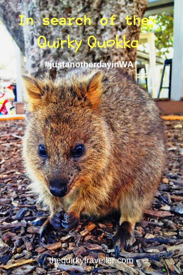 In search of the quirky quokka - zoedawes
