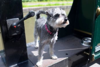 Mabel the dog on a canal boat holiday