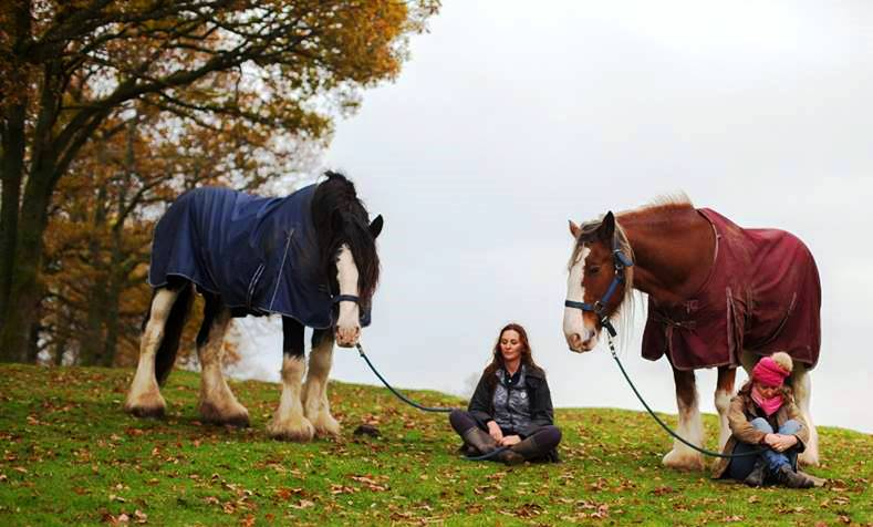 Meditate with Horses at Full Circle Retreats
