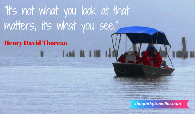 Henry David Thoreau quote - image zoedawes