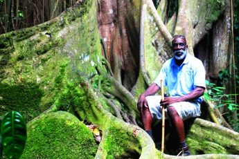 In the rain forest on St Kitts Caribbean island - photo Zoe Dawes
