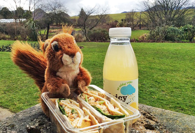 Oxley the Red Squirrel having lunch in Hope Park Keswick