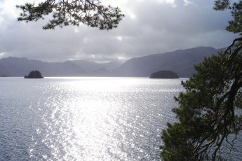 Pines at Friar's Crag Derwentwater - photo Zoe Dawes