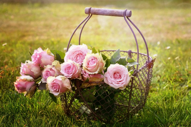 Pink roses in a basket - in praise of the rose - The Quirky Traveller