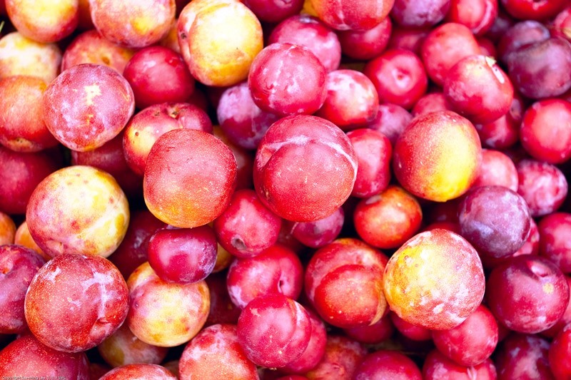 Fresh Plums - prefect for Plum Jam