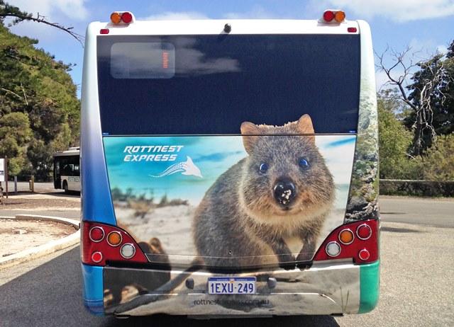 Rottnest Island bus with quokka