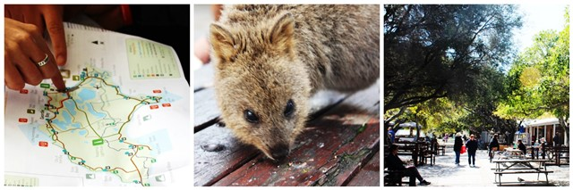 Rottnest Settlement and quokka - collage zoedawes