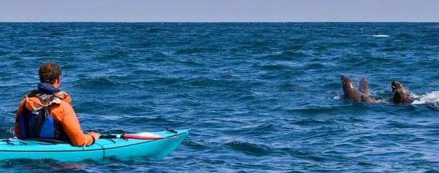 Sea Kayaking at Swakopmund Namibia
