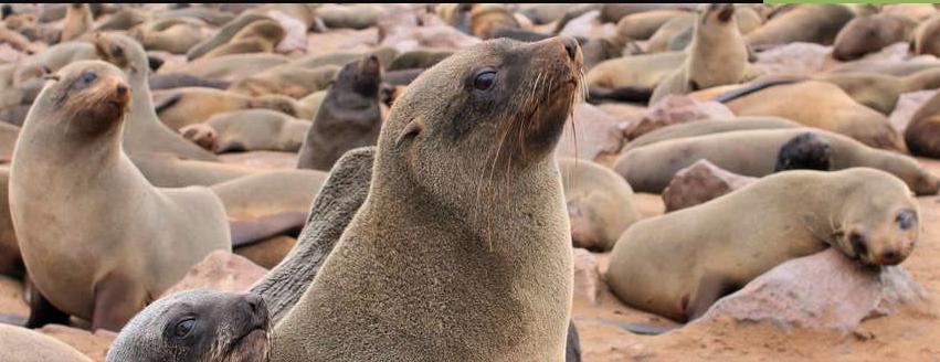 Seals at Swakopmund Namibia