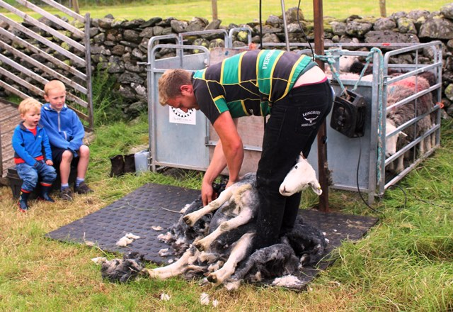Sheep shearing Langdale Gala