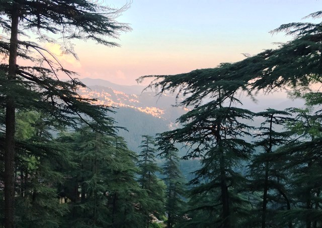 Shimla through the pine trees from the Toy Train - photo Zoe Dawes