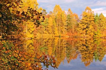 Places to see autumn colour in the Lake District - Tarn Hows - photo Zoe Dawes