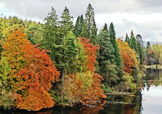 Autumn trees beside Tarn Hows Lake District - image zoedawes