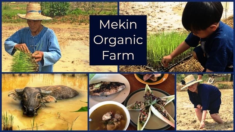 Mekin Organic Farm Roi Et province North East Thailand - Zoe Dawes