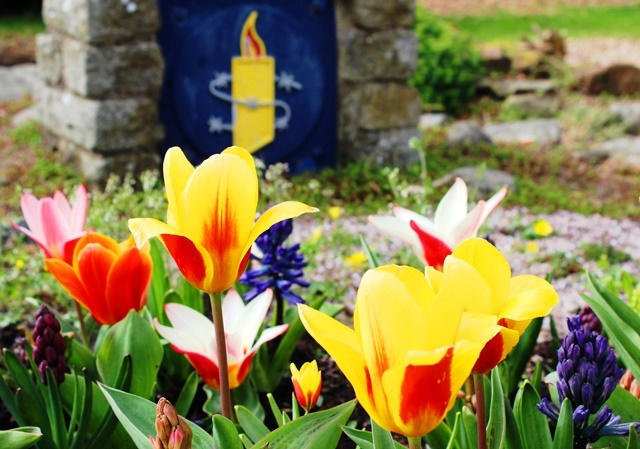 Tulips and hyacinths Whalley Abbey